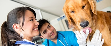 Pet Care Business Insurance