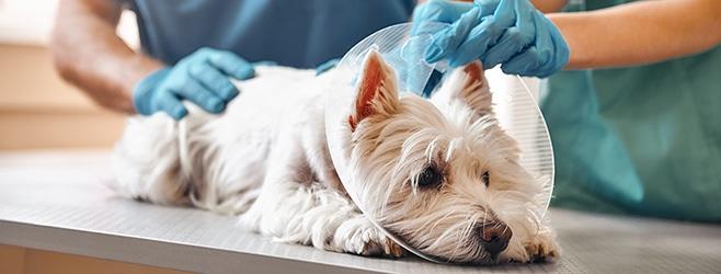 Average Cost of Pet Insurance
